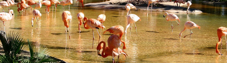 Dierentuin Barcelona (Parc Zoològic de Barcelona)